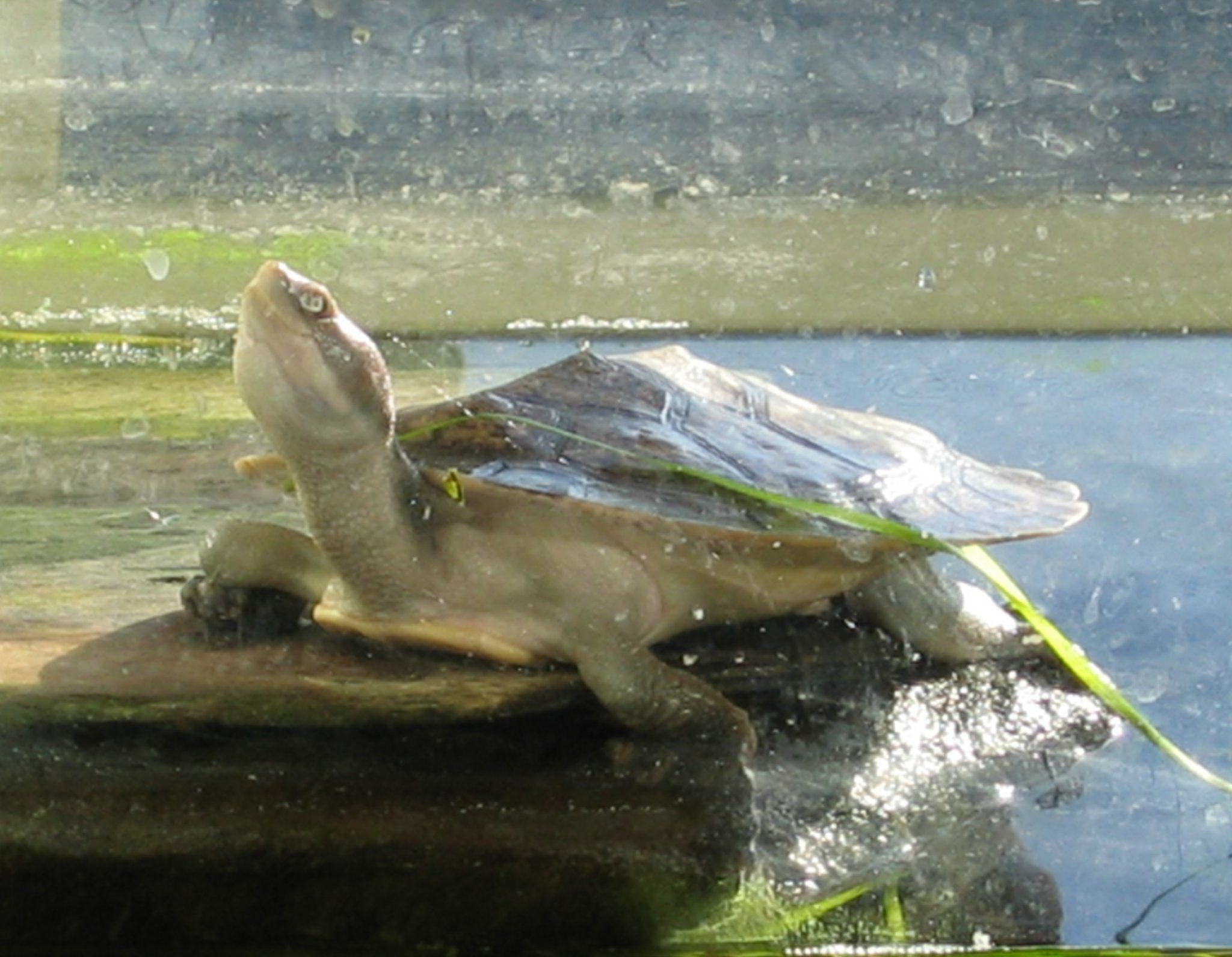 Reptile Party Turtle